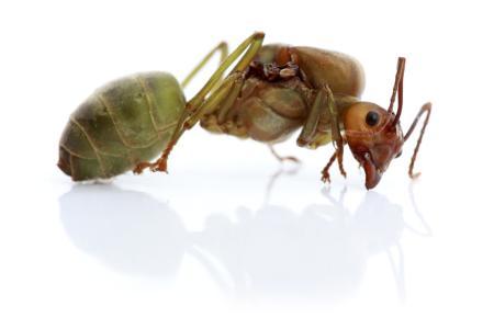 滅蟲公司滅蟲